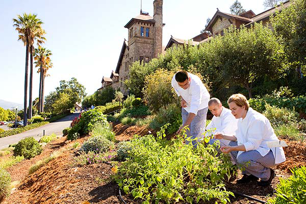 Students in the herb garden at the 澳门人威尼斯app手机官网 at Greystone. This campus has a unique inspiring setting in California's wine country.